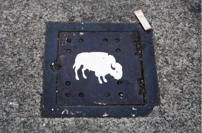 A little white buffalo on 17th St near South Van Ness.