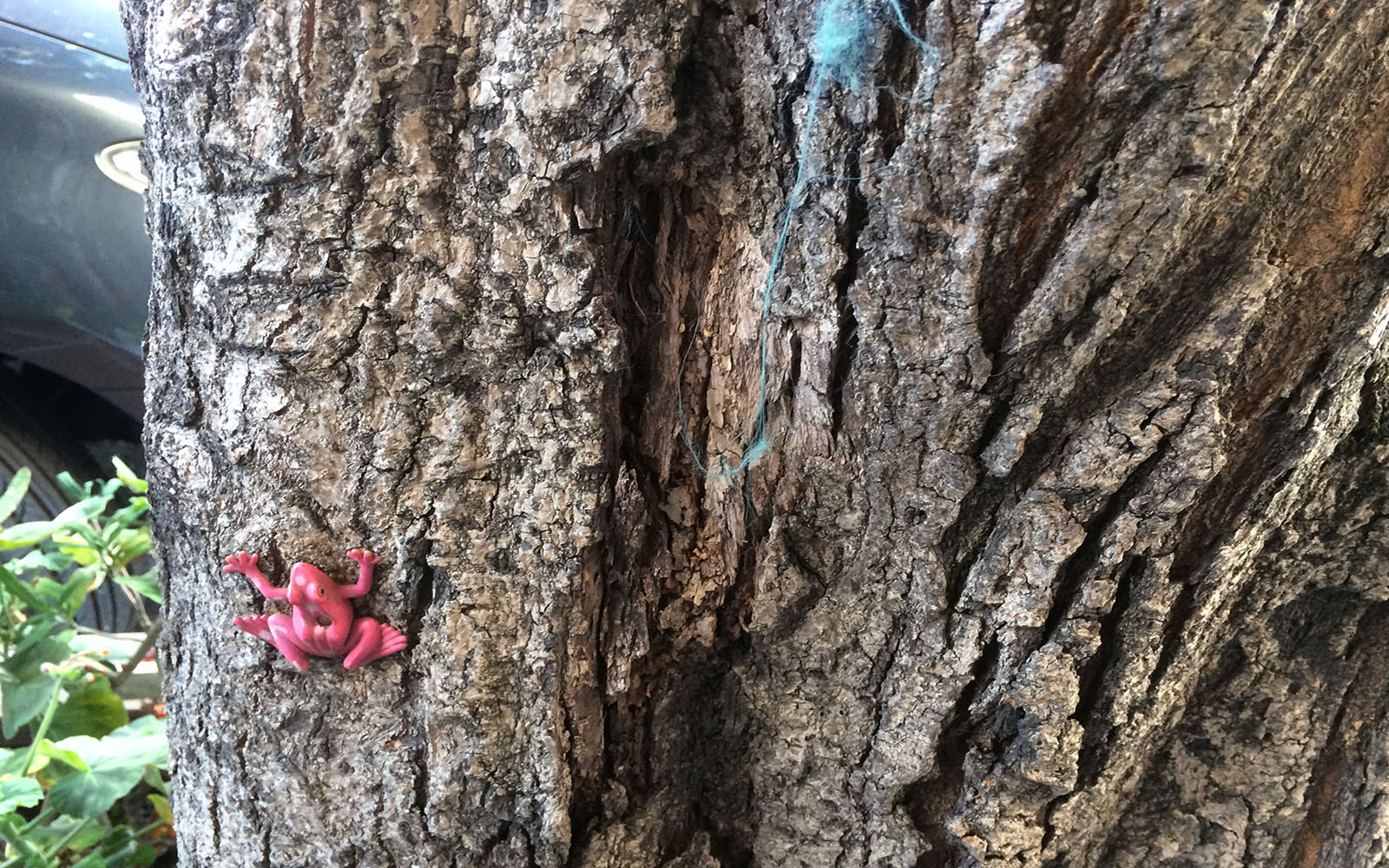SNAP: Tree Frog