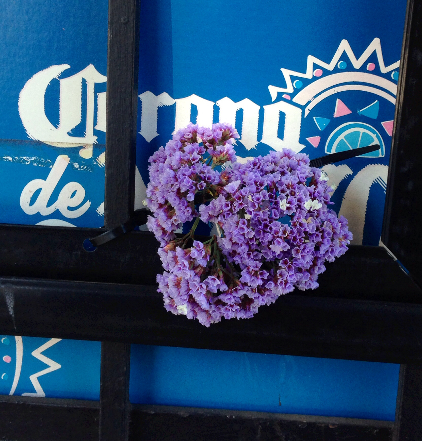 Snap: Beer and Flowers