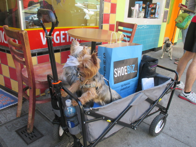 SNAP: We Just Ride Around