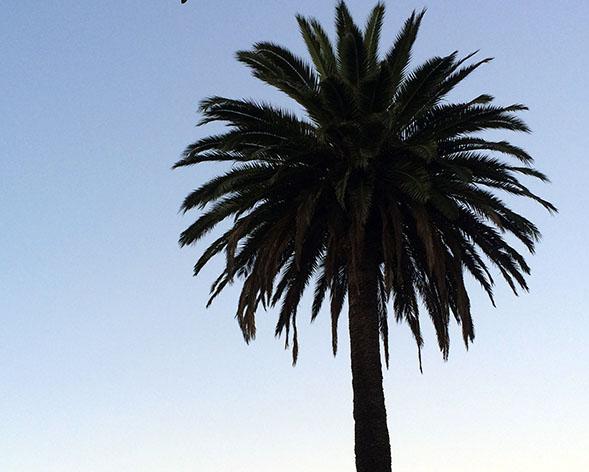 Palm Tuesday. Photo by Mark Rabine.