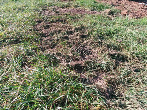 messygrass