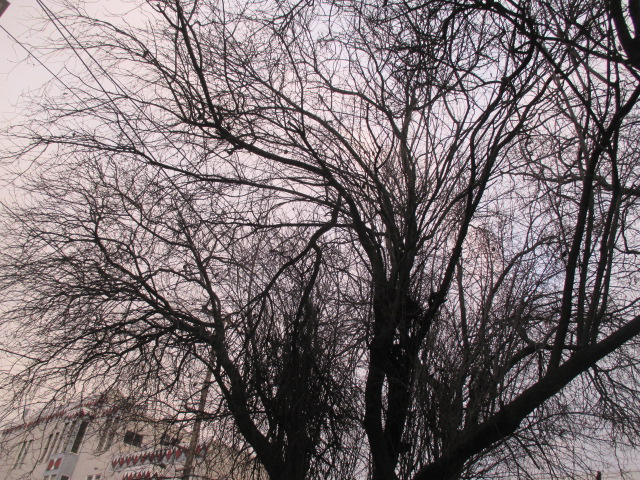 Bare Trees Photo by Kathleen Narruhn