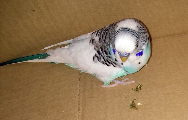 A Parakeet Walks into a Hackspace