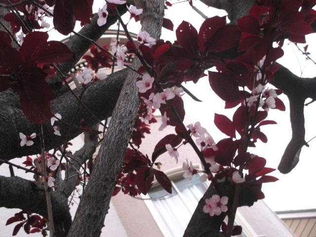 Sign of Spring Photo by Kathleen Narruhn