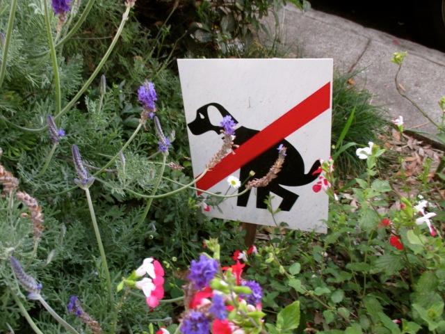 No Pooping Photo by Kathleen Narruhn
