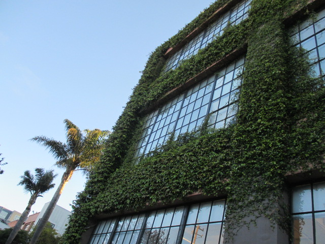 Overgrown Ivy Photo by Kathleen Narruhn