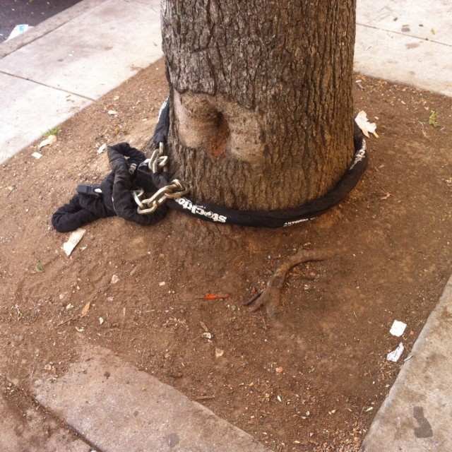 Bondage tree. Nowhere to go. On Bryant and 22nd.