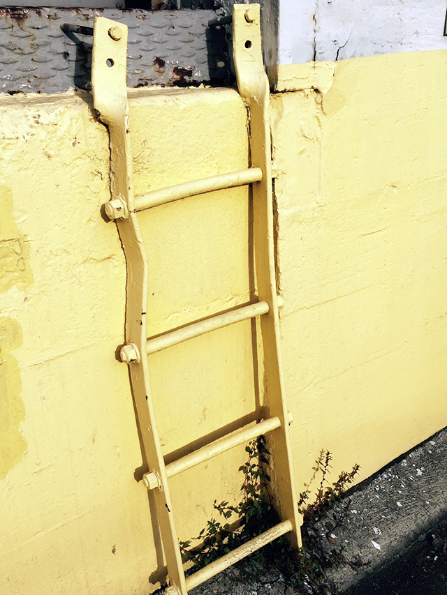 Yellow ladder. Photo by Jane Segal