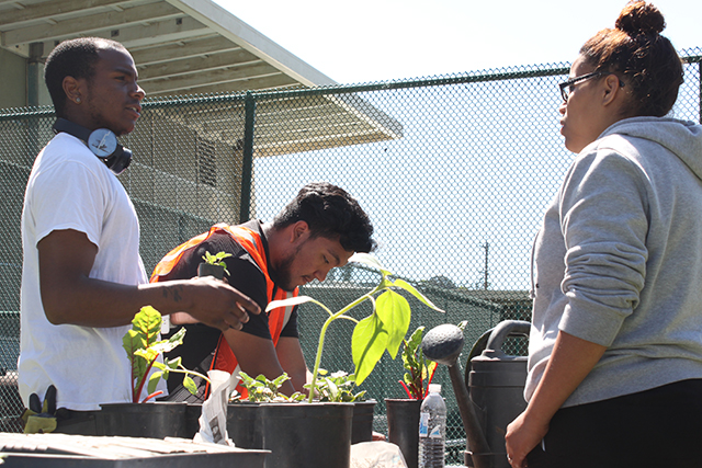 College students working with the Garden Project hand out free plants to neighbors at the Resource Fair. Photo by Laura Wenus