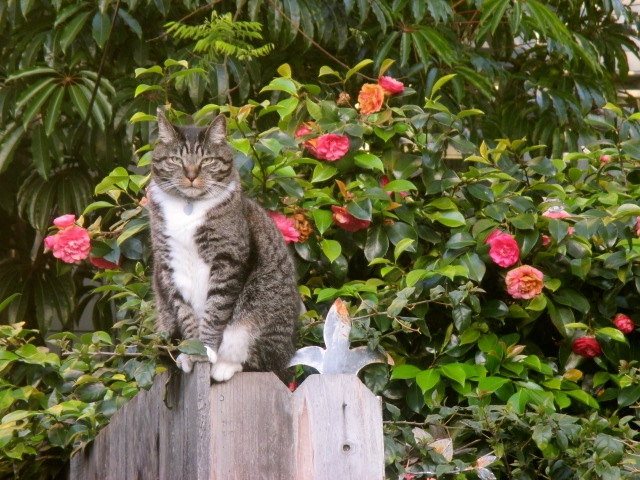 An Alley Guard Cat Photo by Kathleen Narruhn