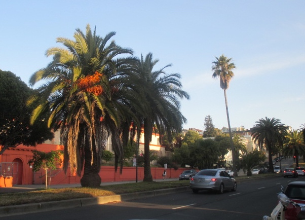 Dolores Palm Trees Photo by Kathleen Narruhn
