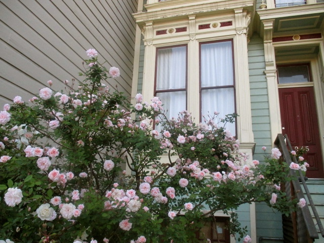 Pink Rose Bush Photo by Kathleen Narruhn