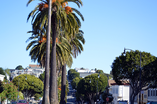 Infamous Tress on Dolores. Photo by Shani Heckman