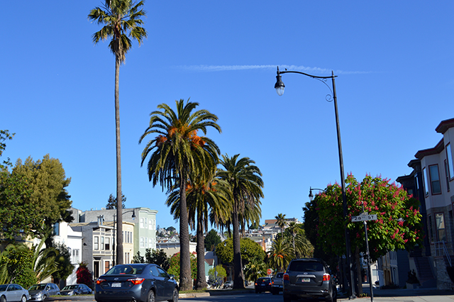 Welcome to SF Dolores. Photo by Shani Heckman