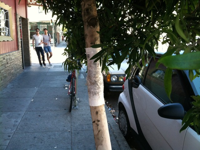 Property Owners Want City to Maintain Trees