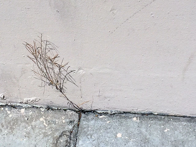Good Morning Mission to Life and Art Between the Cracks!