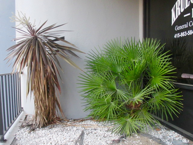 Brown & Green Plants Photo by Kathleen Narruhn