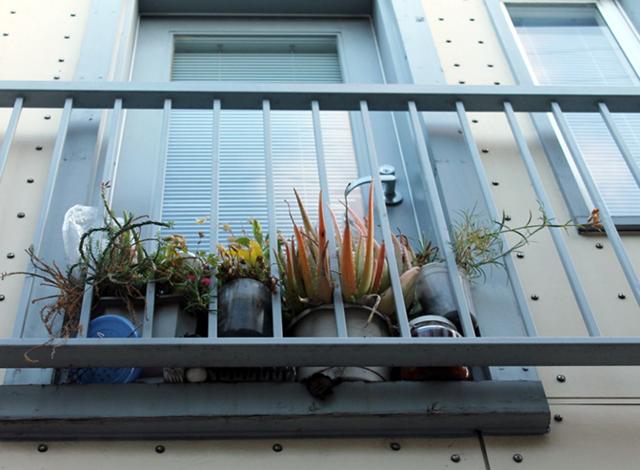 Confined plants. Photo by Anita O'Brien