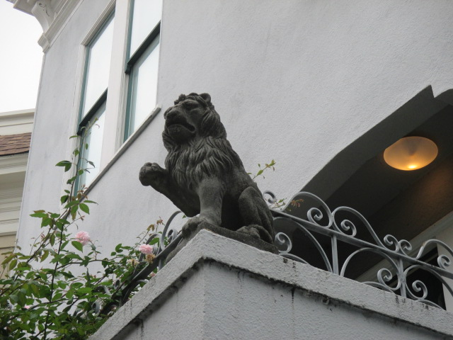 Lion Greeting Photo by Kathleen Narruhn