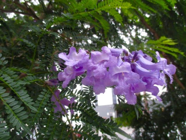 Purple & Delicate Photo by Kathleen Narruhn