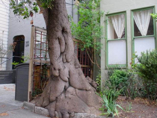 Tree Trunk Photo by Kathleen Narruhn