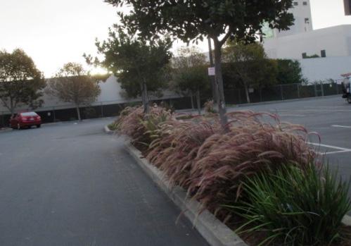 Morning grasses Photo by Kathleen Narruhn