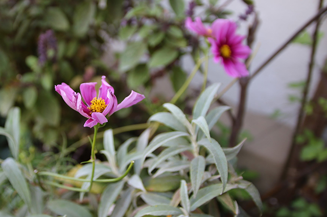 Flowers from the garden. Photo by Janet Kornblum