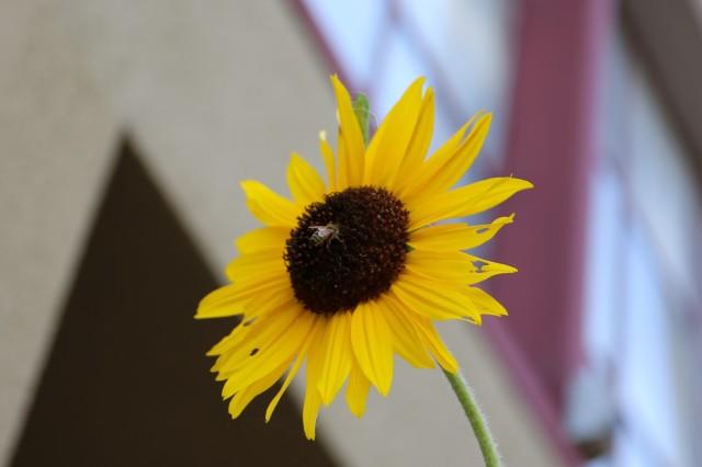 Pollination happens on Alabama Street. Photo by Janet Kornblum
