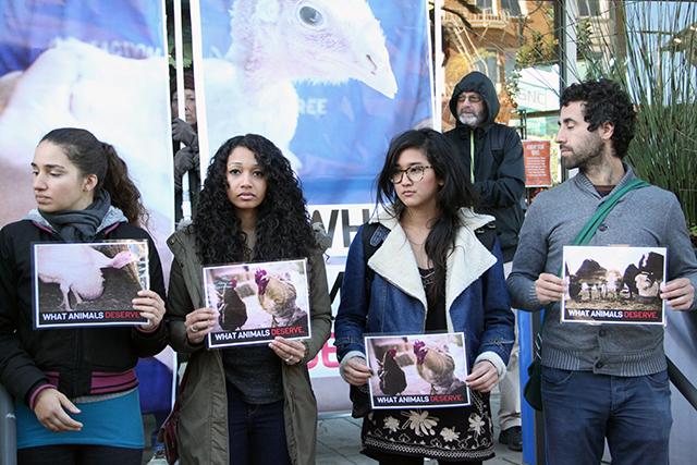 """Humanely Raised"" Turkeys Treated Cruelly, Animal Rights Activists Say"