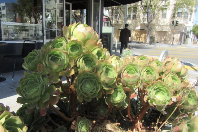 Green Succulents Photo by Kathleen Narruhn