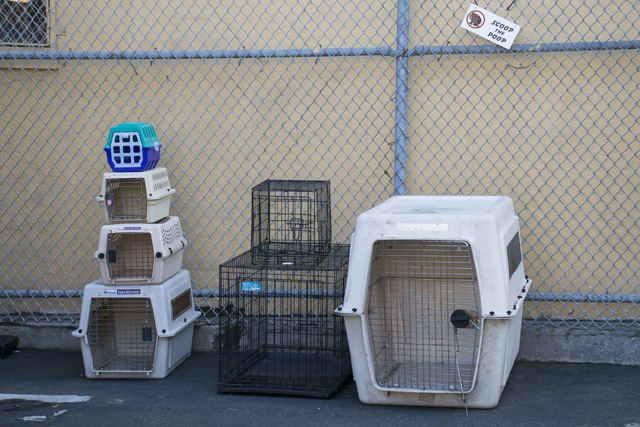 Dog crates that are available at Navigation Center. Photo by Lola M. Chavez