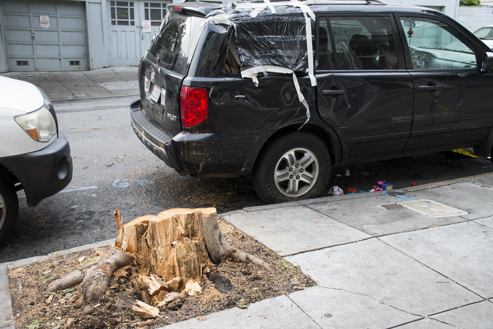 Where a tree fell onto a car. Photo by Lola M. Chavez