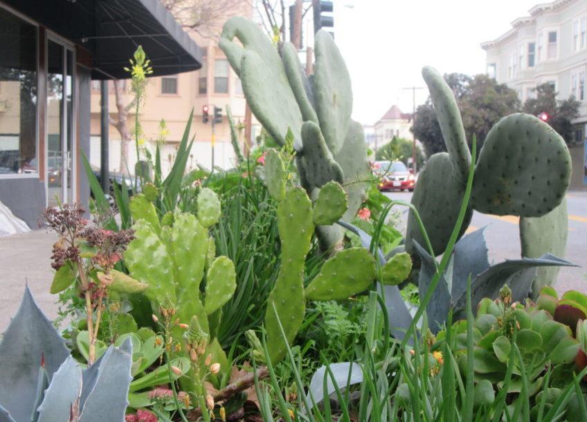 Snap: Rain Water Healthy Succulents