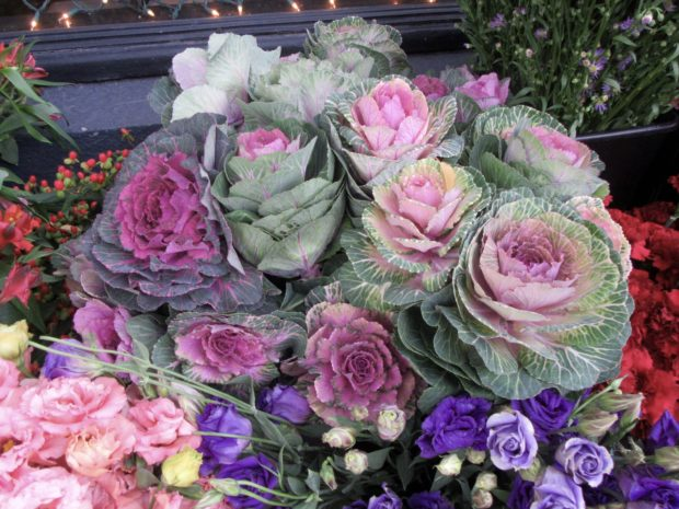 Cabbage  Flowers on Folsom St photo by Kathleen Narruhn