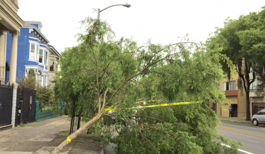 SNAP: Folsom St. Tree Down after a Windy Night