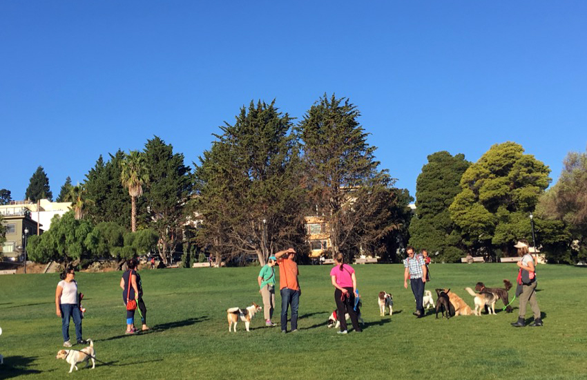 Pit bulls in Dolores Park bite dog and humans