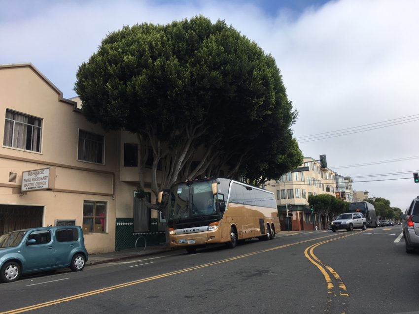 Trees on Valencia Street slated to be axed — is it tech buses' fault, or their own?