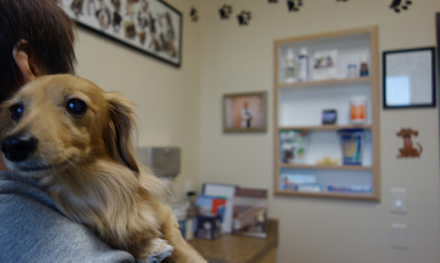 SF veterinary workers unionize, attempt to drive hard bargain with $9 billion VCA corporation