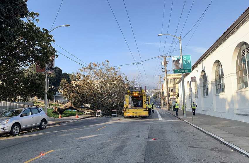Dolores Park tree down, 18th closed between Dolores and Church streets