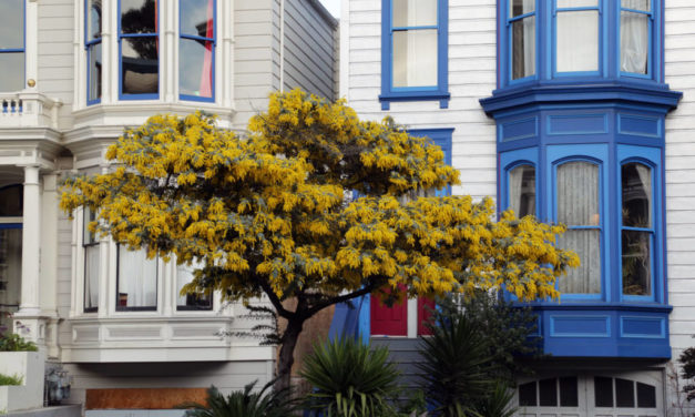 Snap: Victorians in bloom
