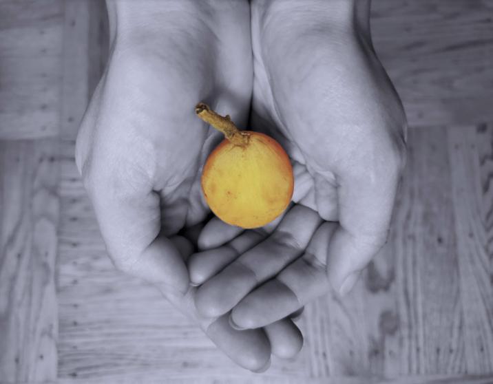 The loquat, San Francisco's secret fruit, is hidden in plain sight