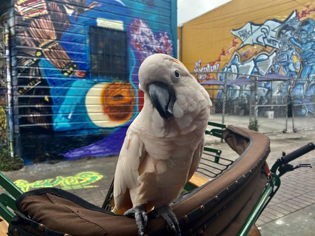 Kai Bansner bird