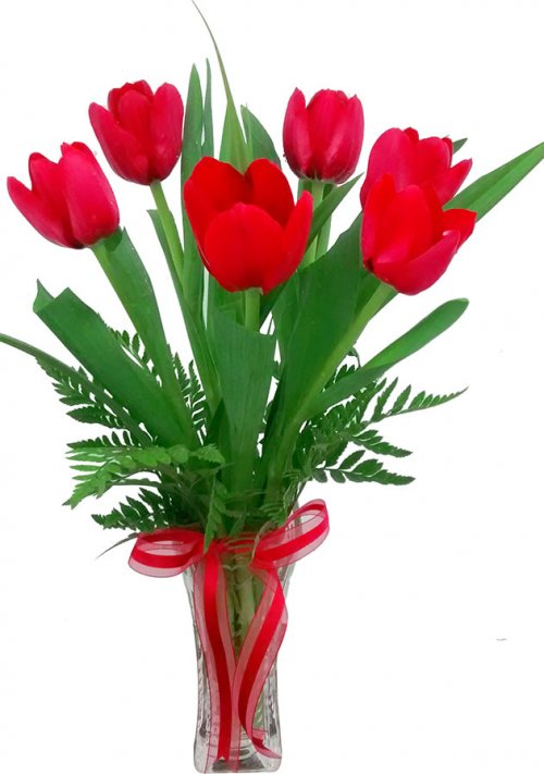 Tulipanes Estrella