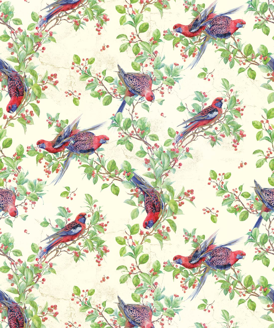 Crimson Rosella Wallpaper