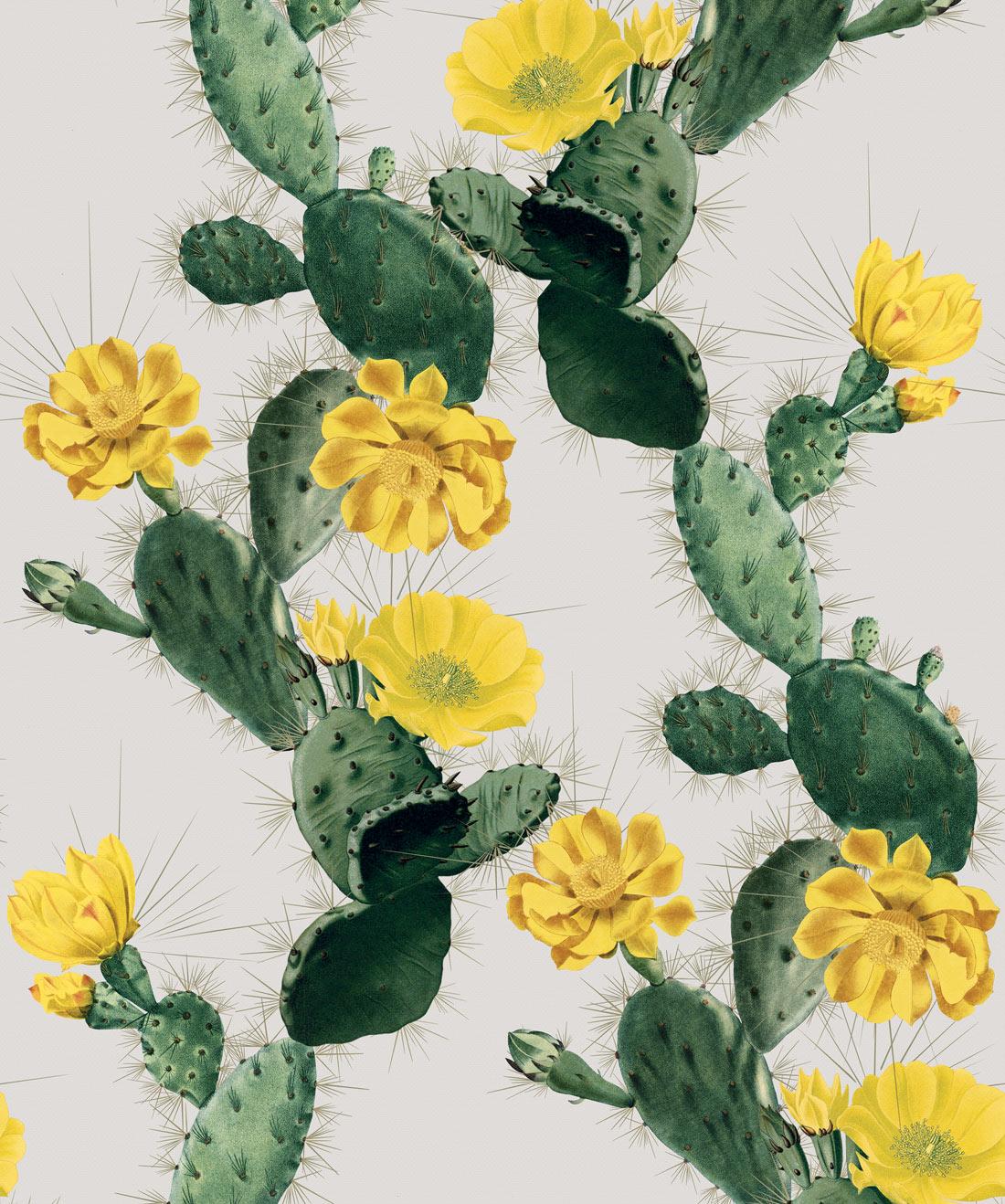Alluring Cactus Wallpaper Bold Bright Cacti Design