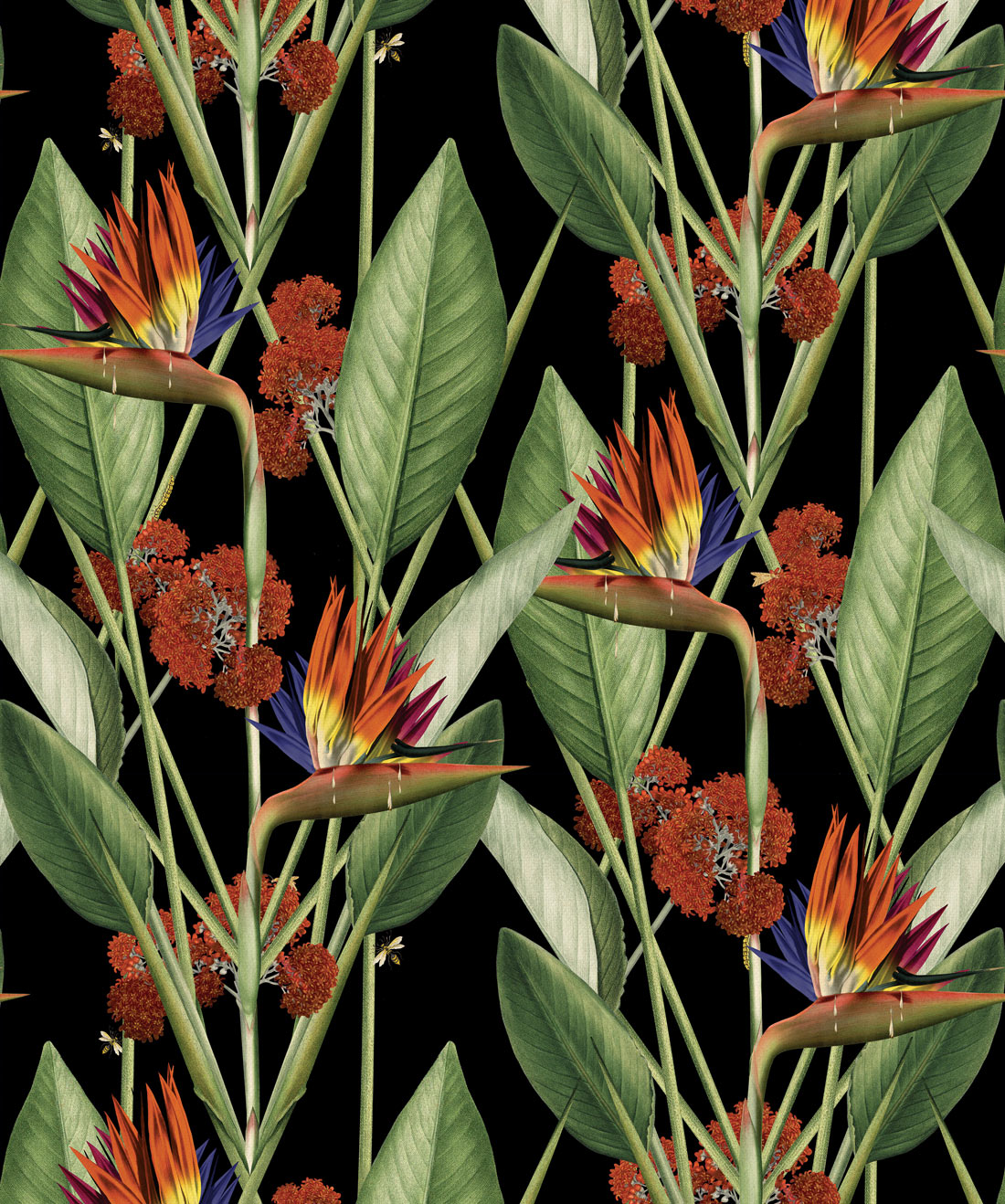 Birds of paradise Wallpaper, Kingdom Home