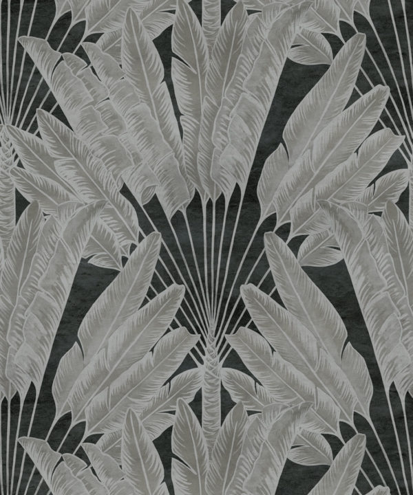 Travelers Palm Charcoal