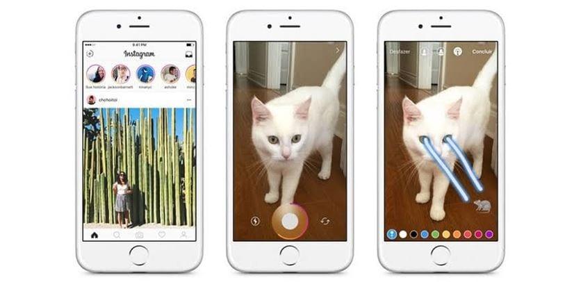 Como aumentar o alcance no Instagram: imagem de um story feito com um gatinho na tela e um efeito de luz nos olhos dele