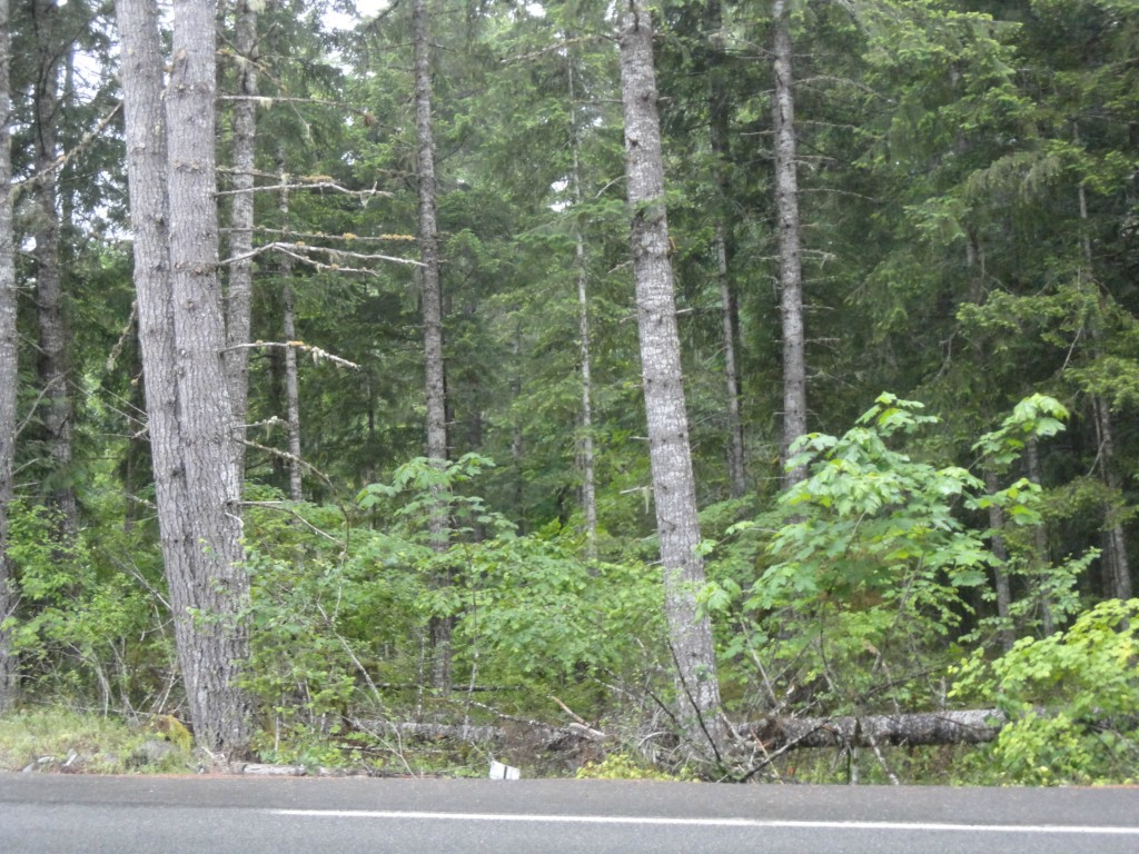 Lovely, extra large, building lot with lots of trees.  Dry creek bed separates two level building sites.  Extra deep lot would allow privacy from road.  Perfect spot to build a cabin for full-time or vacation use.  20 miles to White Pass Ski Area.  Mt. Rainier National Park and Mt. St. Helens are nearby.  Year-round wildlife and recreation opportunities.  HOA dues include pools, domestic water, golf course, club house, and walking paths for $260/yr + $55 pool upgrade assessment for three years.